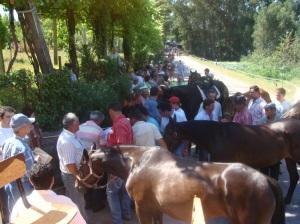 Festa das Colheitas de Vila Verde
