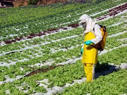 pesticidas3