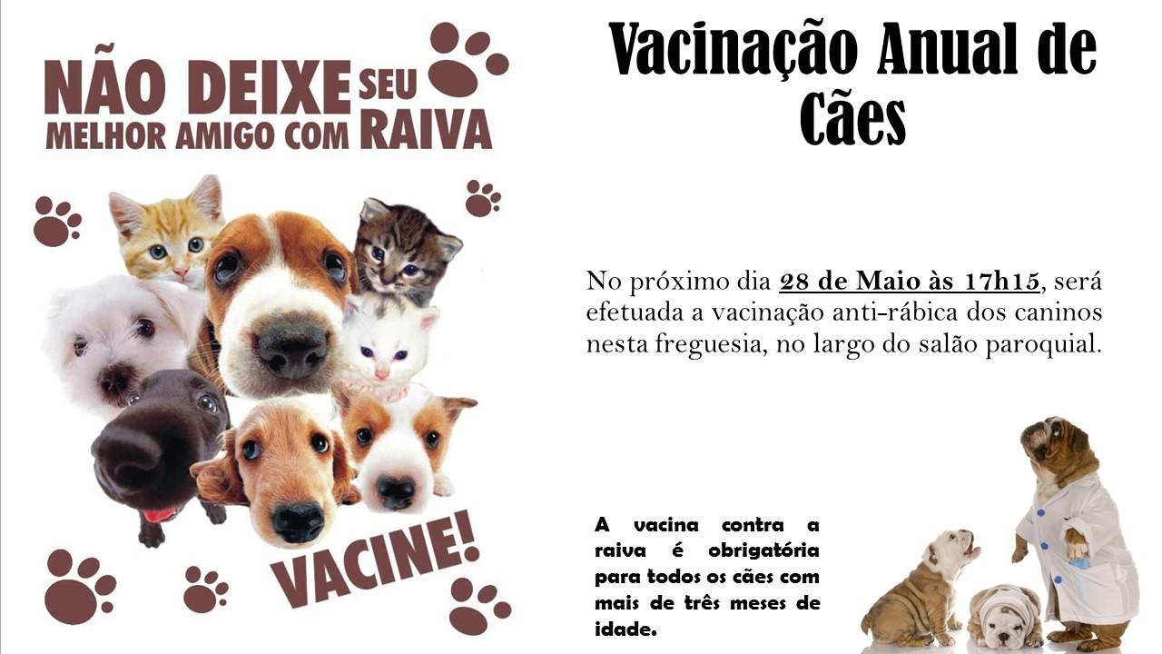 vacinação anual de cães